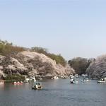 お花見@井の頭公園